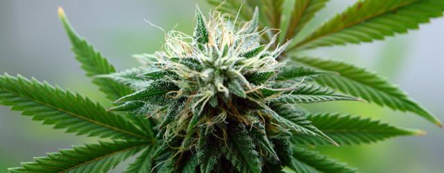 Columbus Marijuana Lawyer